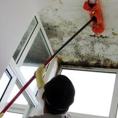 Remover Bolor paredes